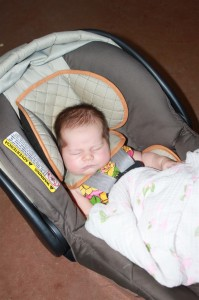 Sophia naps while tasting at L. Mawby